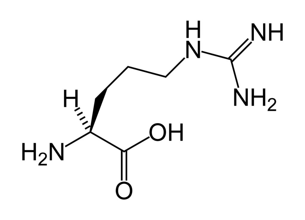 L-arginine-skeletal